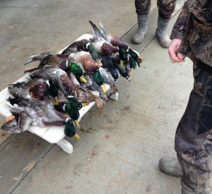 Arkansas Guided Duck Hunts